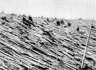 The Tunguska event was an enormously powerful explosion that leveled 80 million trees in an area about 830 square miles.