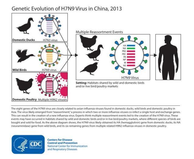 bird flu.jpg